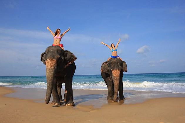 прогулка_на слонах_таиланд_новая_туристическая_система